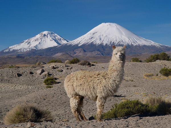Необычный отдых в Чили