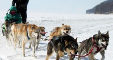 Карельские туры на собачьих упряжках